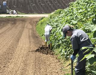 畑仕事、牛舎内作業